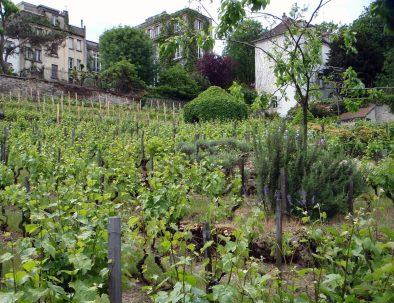 Montmartre-vignes